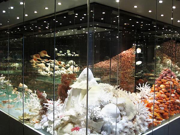 Muzeum-muszli1